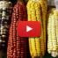 5ª Festa das sementes orgânicas e biodinâmicas do sul de Minas