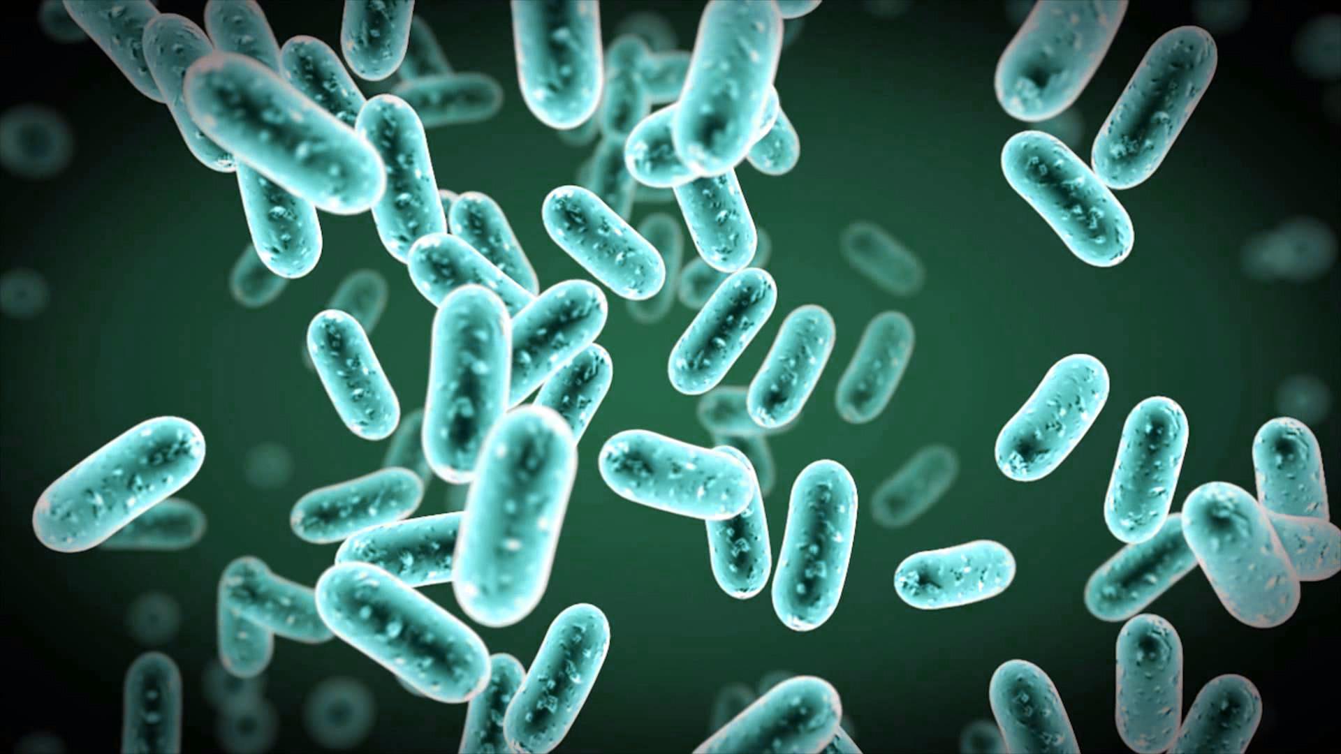 Vitamina B12 - Sintetizada por bactérias